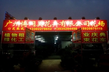广州博同美花卉有限公司花场