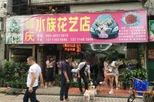 喜庆水族花艺店